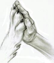 Lunde-Pfote-Hand